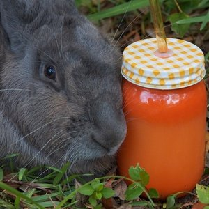 Orange juice named Bunny Brew